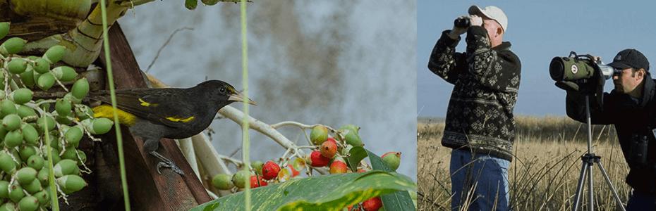 Avistamiento de Aves en Perú