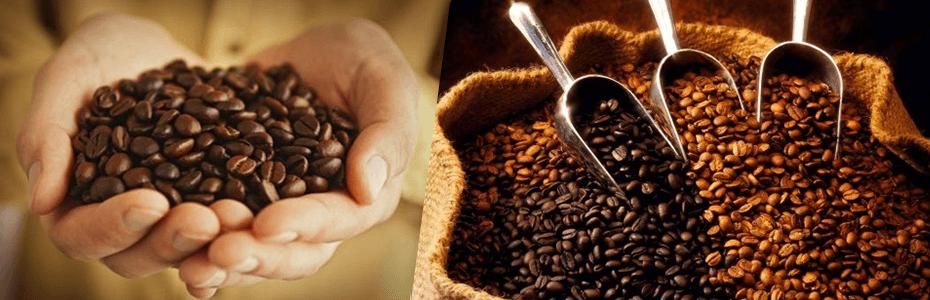 Café de Puno es elegido en EEUU como el mejor del mundo