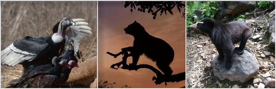 Reserva Ecológica de Chaparri: un fabuloso paraíso silvestre en Chiclayo